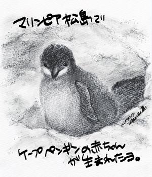 マリンピア松島でケープペンギンの赤ちゃんが生まれたヨ。