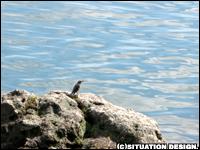 鳥。果敢に海を眺めているよう。