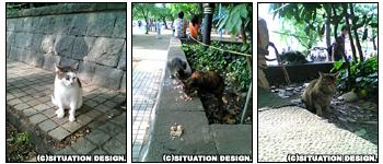 上野公園の猫たち