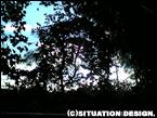 住宅地隣の雑木林